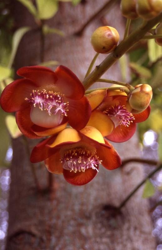 Flowercannon_2